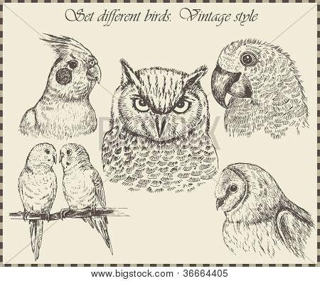 conjunto de vetores: aves - variedade de ilustrações de pássaros vintage