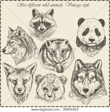 vector set: different wild animals - various vintage style.
