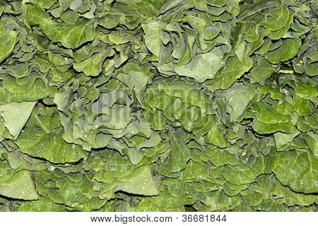 Detail of collard greens produce