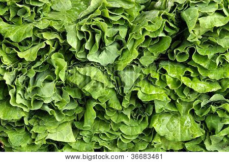 Closeup of collard greens produce