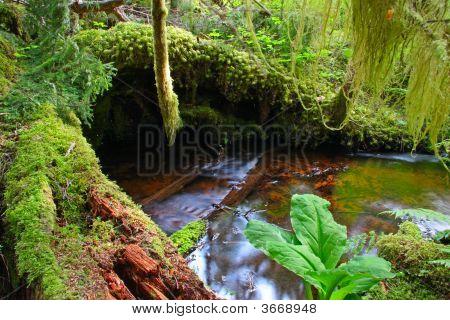 Creek im Regenwald