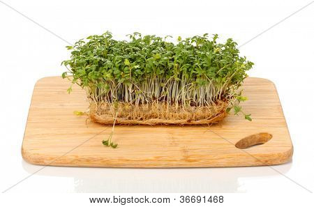 Frische Kresse Salat auf Holzbrett, isolated on white