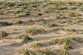 foto of semi-arid  - Dry barren terrain with scrubby vegetation in an arid semi - JPG