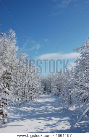 Snowy Path In A Winter Landscape