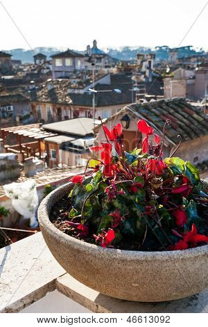 Red Flower Under Old District Of Rome