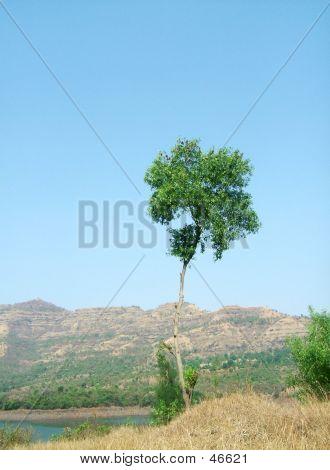 Landscape-A Lone Tree