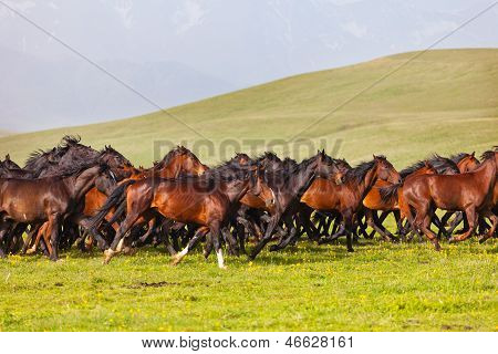 Herd of horses on a summer green pasture