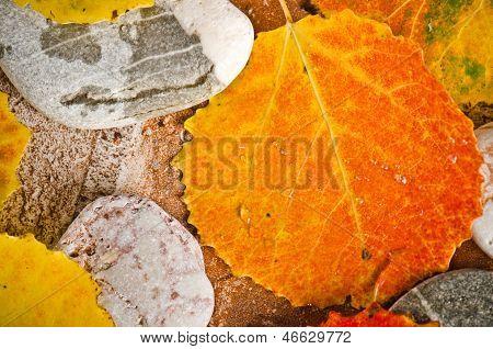 Fallen autumn leaves on stones, close-up