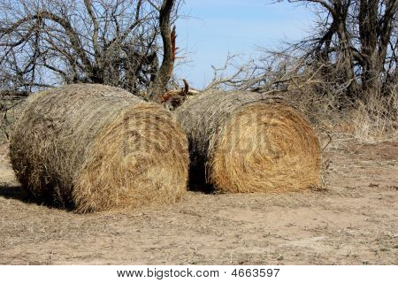 Round Haybales