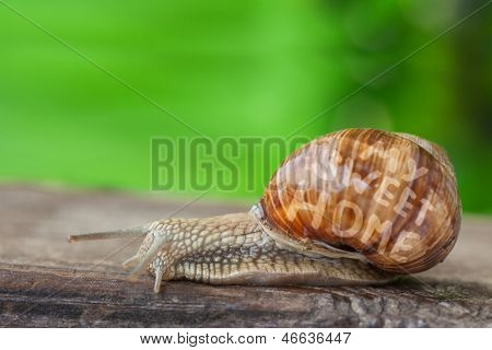 Snail Mobile Sweet Home