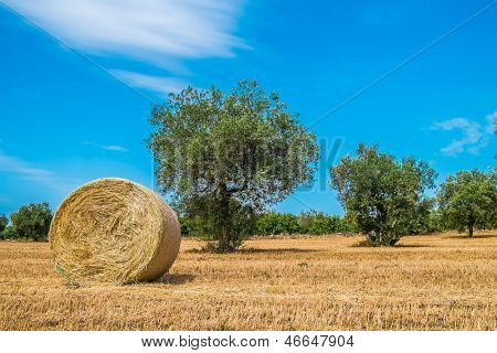 Sheaves Of Straw, Apulia Region