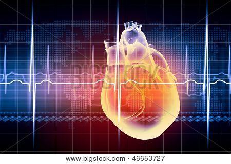 Menschliche Herz schlägt