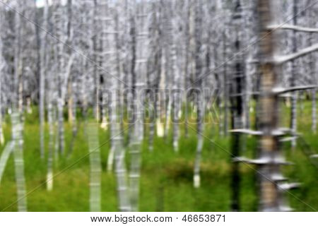 Motion Blurred Roadside Trees And Grass