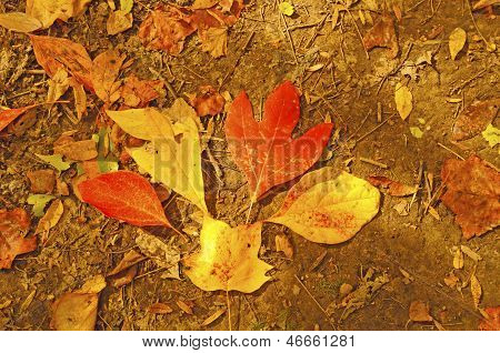 Fall Leaf Bouquet In The Forest
