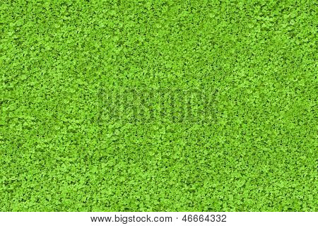 Green nature texture background copy space