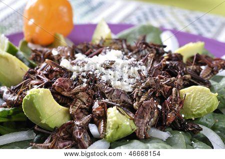 Grasshopper Salad