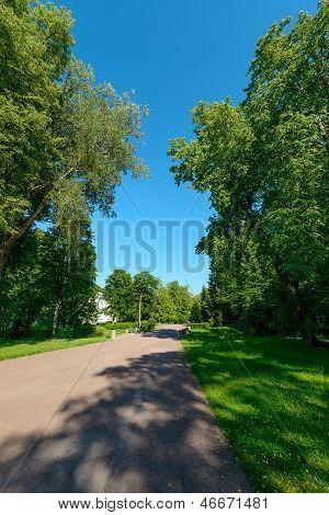 Sunny Summer Park. Russia