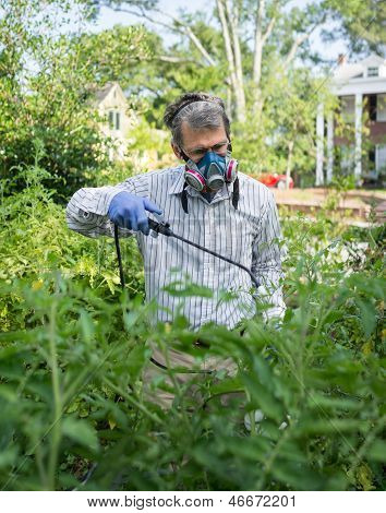 Man Spraying Insecticide in Tomato Vegetable Garden