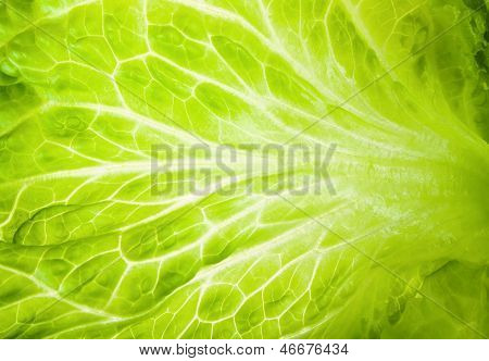 Macro Texture Of Green Lettuce Leaves