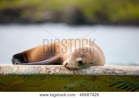 Portrait of sea lion relaxing at fishing boat
