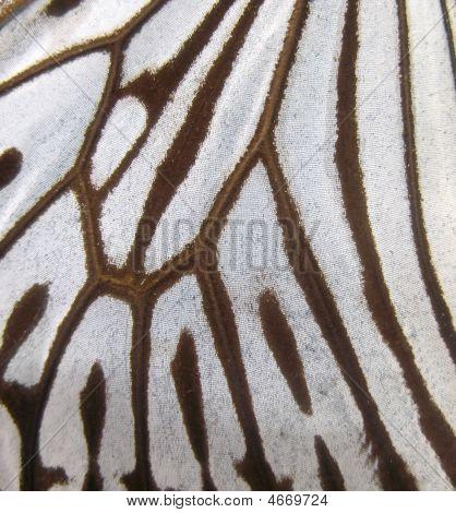 Butterfly Wing Macro