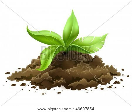 plant with green leaves growing from the ground isolated on white background - eps10 vector illustration