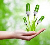 pic of photosynthesis  - eco energy bulb in hand - JPG
