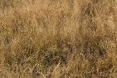 stock photo of veld  - Dry wild veld grassland random pattern background - JPG