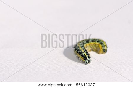 Grub Closeup