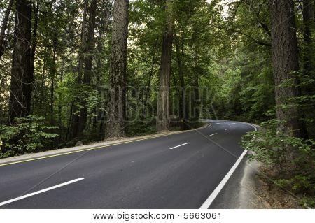 Forrest Highway