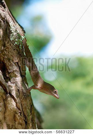 Green Lizard sitting on a piece of wood