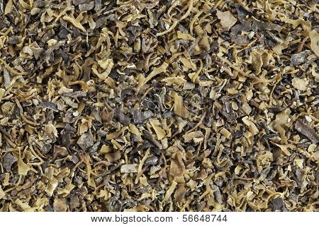Background of dried Irish moss seaweed (Chondrus crispus)  rich in iodine, harvested to make carrageenan, a thickening agent for jellies, puddings, and soups, traditional herbal remedy in Ireland.