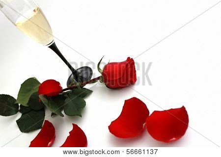 Red rose for St. Valentine`s day
