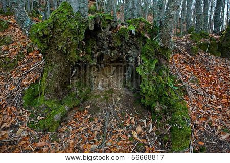 Green Open Stump Trunk