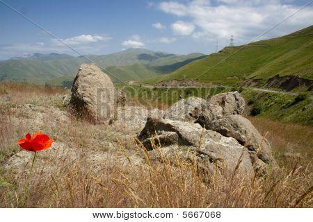 Poppy Flower In Mountain