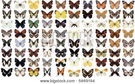 80 Butterflies