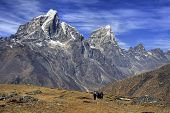 Taboche Mountain (6501m) and Trekking Path - As seen from Ama Dablam Base Camp, Himalayas, Nepal