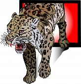 The Outrage Snow Leopard (vector)
