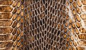 picture of anaconda  - Snake skin texture closeup for background and wallpaper - JPG