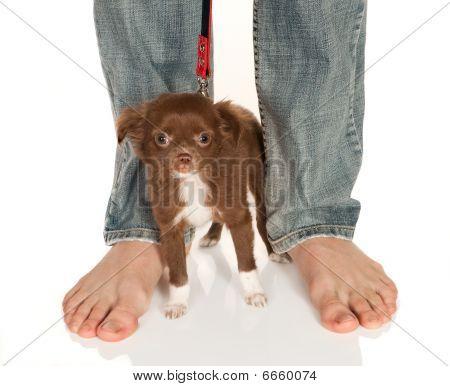 Cachorrinho pequeno de pés grandes