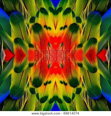 An Exotic Colorful Of Background Pattern Made From Red Yellow And Blue Macaw Bird Feathers