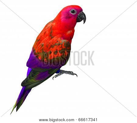 Beautiful Red And Purple Parrot Bird Isolated On White Background