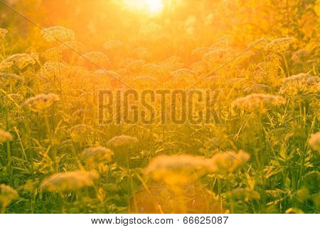 Flowers and grass in the sunlight.