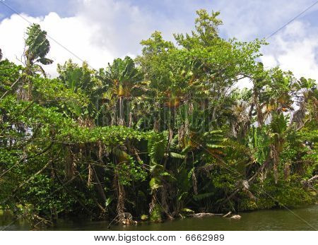 Jungle in the tropical rainforest