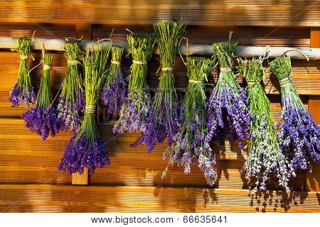 To Dry Hung Up Scented Lavender Bundles
