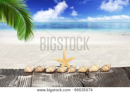 Starfish And Seashells Under Palm Frond