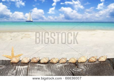 Starfish And Seashells On Wooden Boards