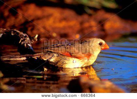 Cardinal Bath