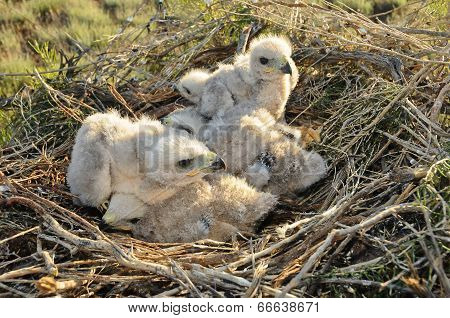 Nestling In The Nest
