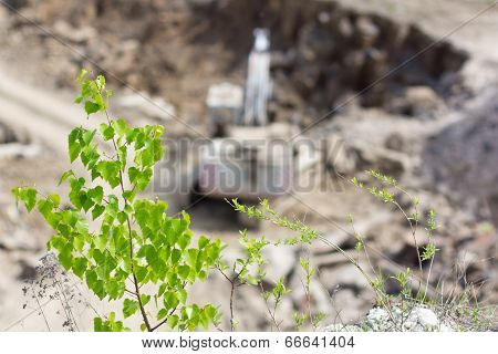 Tree Over Basalt Quarry With Excavator
